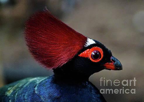 Birds 124 by Ben Yassa