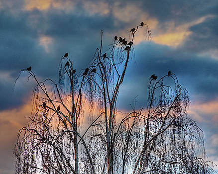 Birds at Sunset by John Rodrigues