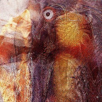 Birds Eye by Tom Romeo
