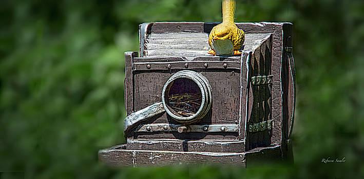 Bird's Eye View by Rebecca Samler