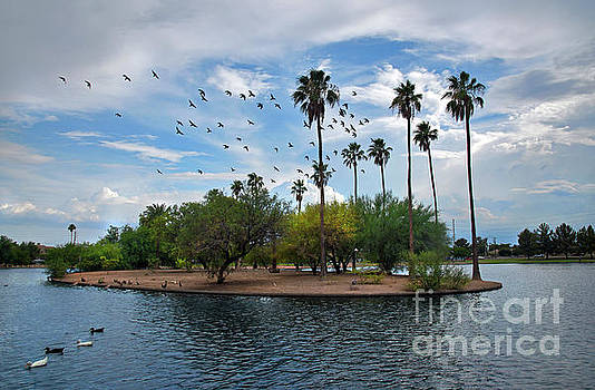 Birds fly high by Desert Images
