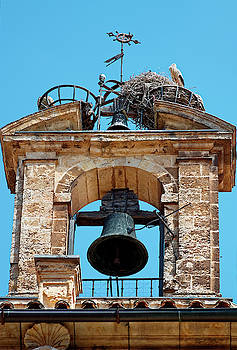 Birds Nest in Bell Tower by Sally Weigand