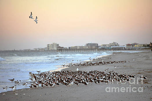Birds on Cape Canaveral Beach by Catherine Sherman