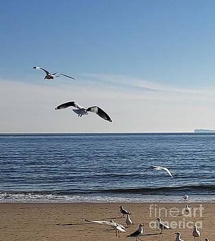 Birds on the ocean beach by Olga Malamud-Pavlovich