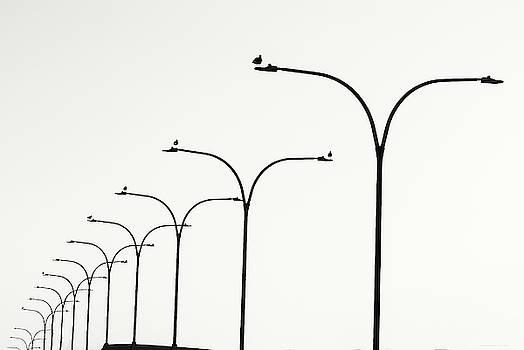Denise Dube - Birds Watch Over Queensway Bridge