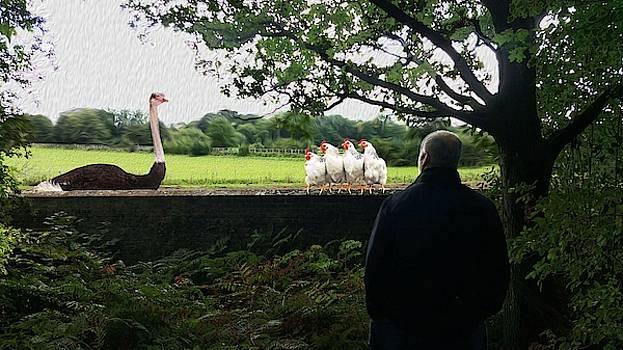 Birds Watching 3 by Bruce Iorio