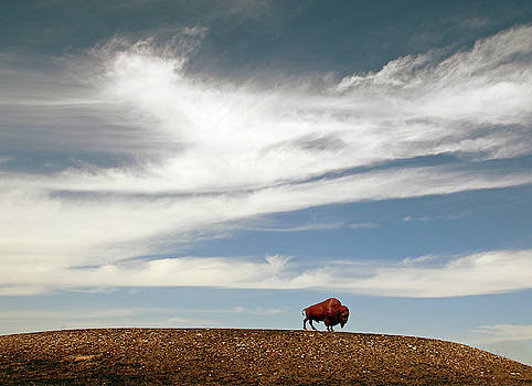 Bison on the Plains by Christopher McKenzie
