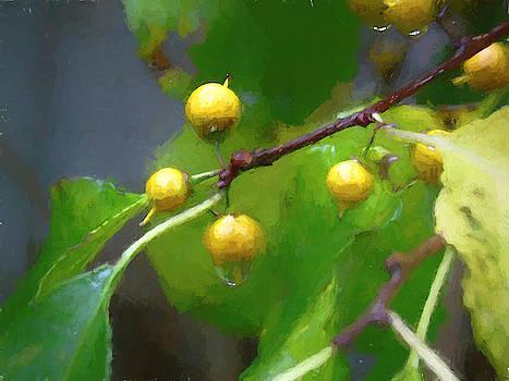 Bittersweet Berries In The Rain by Susan Lafleur