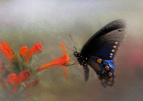 Black and Blue Beauty by Leticia Latocki