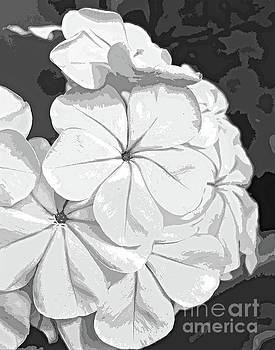 Black and White Blossom Abstract 300 by Sharon Williams Eng