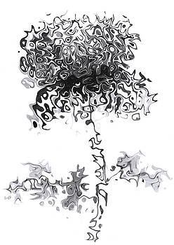 Black and white Chrysanthemum by Steve Clarke