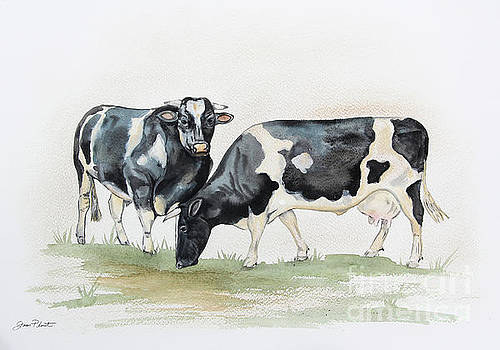 Black And White Cows In Watercolor by Jean Plout