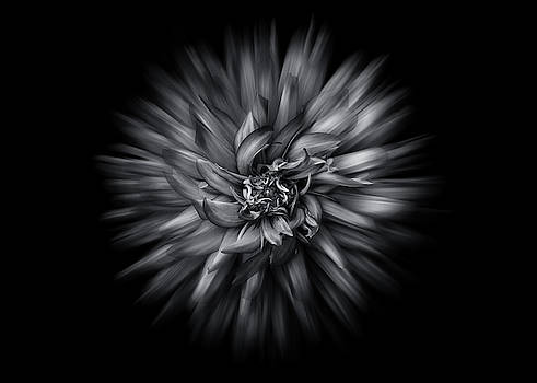 Black and White Flower Flow No 5 by Brian Carson