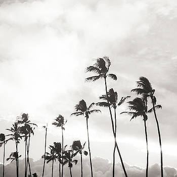 Black and White Palms by Angelina Hills