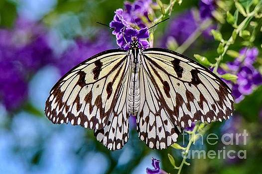 Black and White Paper Kite Butterfly by Susan Rydberg