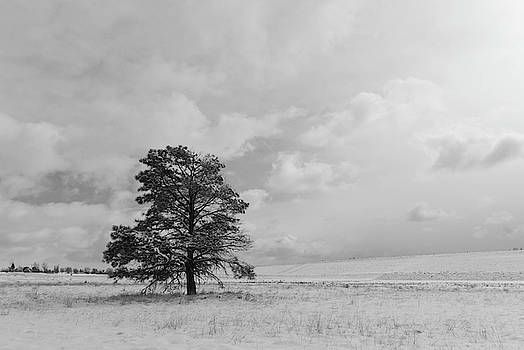 Black and White Solitary Tree After a Snow Storm by Cascade Colors