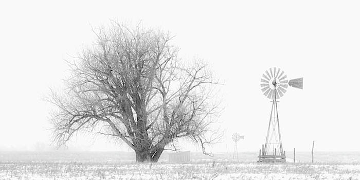 Rob Graham - Black and White Windmill 01