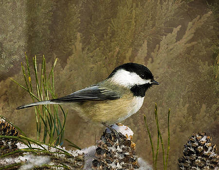 Black Capped Chickadee In a Pine Tree by Sandi OReilly