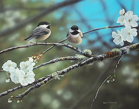 Black Capped Chickadees by Peter Mathios