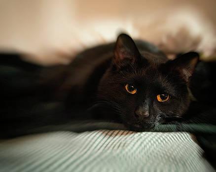 Joann Vitali - Black Cat - Gold Eyes