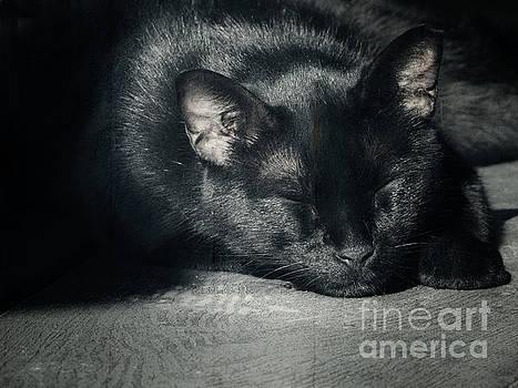 Black Cat Sleeping by Ella Kaye Dickey
