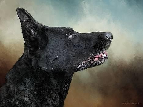 Black German Shepherd Portrait by Melissa Bittinger