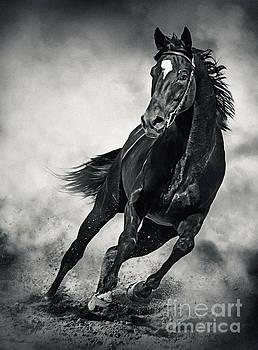 Black Horse Running Wild Black and White by Dimitar Hristov