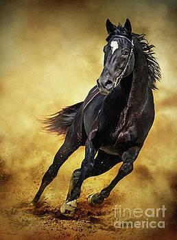 Black Horse Running Wild by Dimitar Hristov