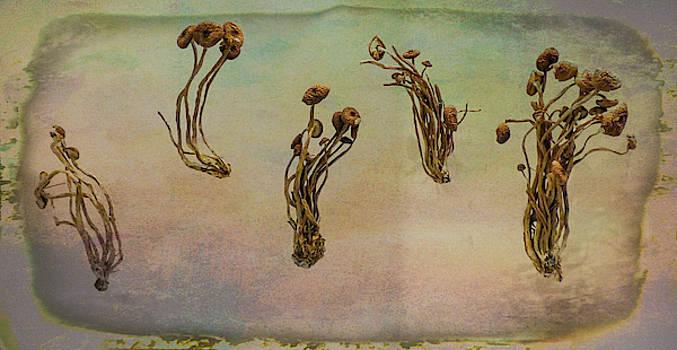 Black Popular Mushrooms by Steve Taylor