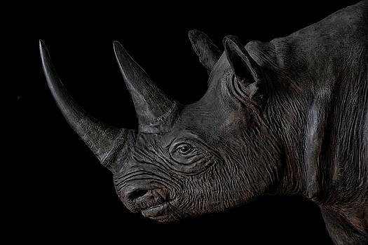 Black Rhino by Joachim G Pinkawa