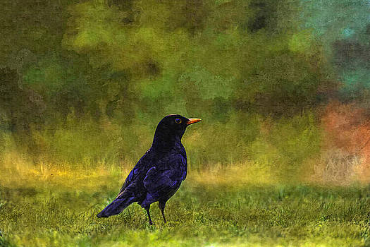 Blackbird In A Field Painting by Sandi OReilly