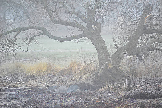 Blanket of Fog by Randi Grace Nilsberg