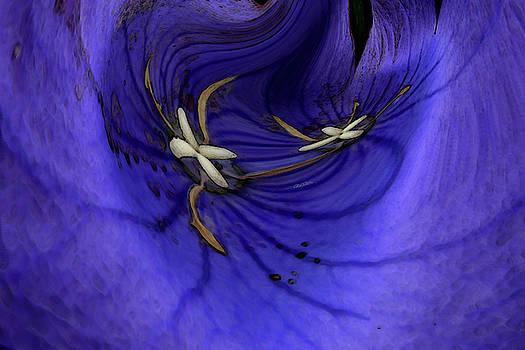 Bleu by Carel Schmidlkofer