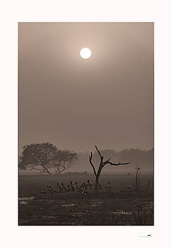 Bliss and Peace by From Dawn To Dusk Natural History Photography