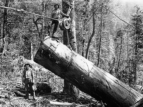 Daniel Hagerman - BLOCK and TACKLE REDWOOD LOGGING c. 1879