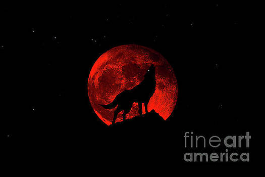 Ricardos Creations - Blood Red Wolf Supermoon Eclipse 873k