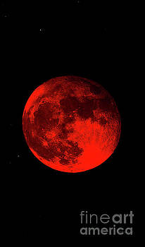 Ricardos Creations - Blood Red Wolf Supermoon Eclipse Series 873dr
