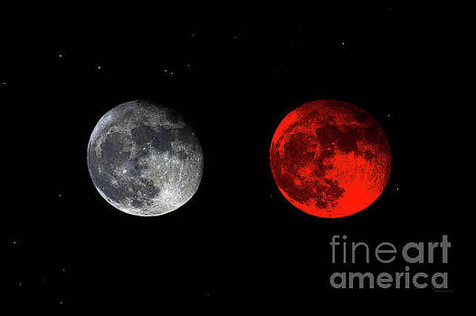 Ricardos Creations - Blood Red Wolf Supermoon Eclipse Series 873e