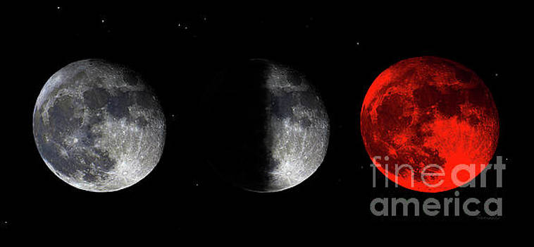 Ricardos Creations - Blood Red Wolf Supermoon Eclipse Series 873f