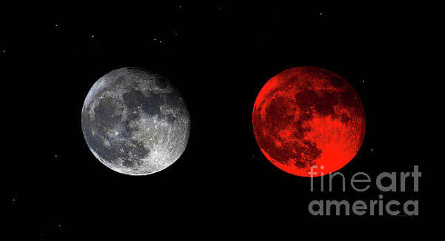 Ricardos Creations - Blood Red Wolf Supermoon Eclipse Series 873g