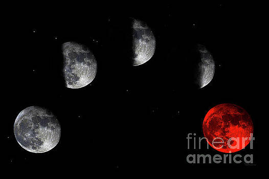 Ricardos Creations - Blood Red Wolf Supermoon Eclipse Series 873h