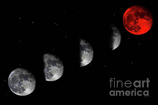 Ricardos Creations - Blood Red Wolf Supermoon Eclipse Series 873i