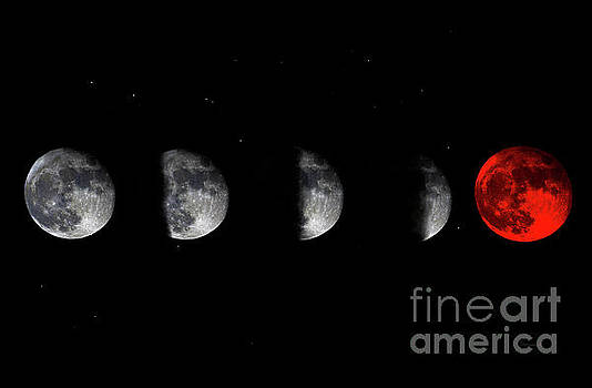 Ricardos Creations - Blood Red Wolf Supermoon Eclipse Series 873j