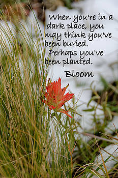 Bloom and Grow by Gaelyn Olmsted
