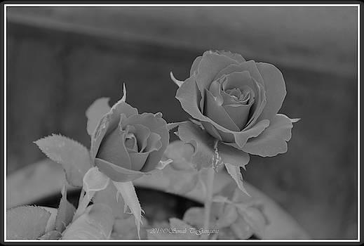 Bloom of Roses by Sonali Gangane