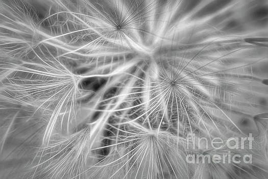 Bloomed black and white by Veikko Suikkanen