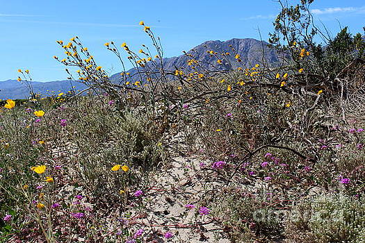 Blooming Desert by Katherine Erickson