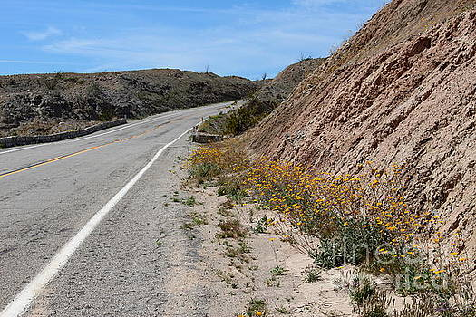 Blooming Roadway by Katherine Erickson