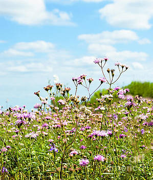 Blooms of Spring by Leticia Latocki