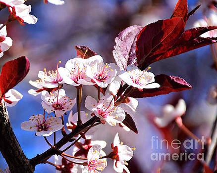 Blossoms And Blue Skies by Kathy M Krause